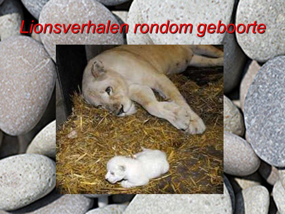 Lionsverhalen rondom geboorte
