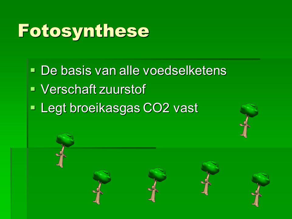 Fotosynthese  De basis van alle voedselketens  Verschaft zuurstof  Legt broeikasgas CO2 vast