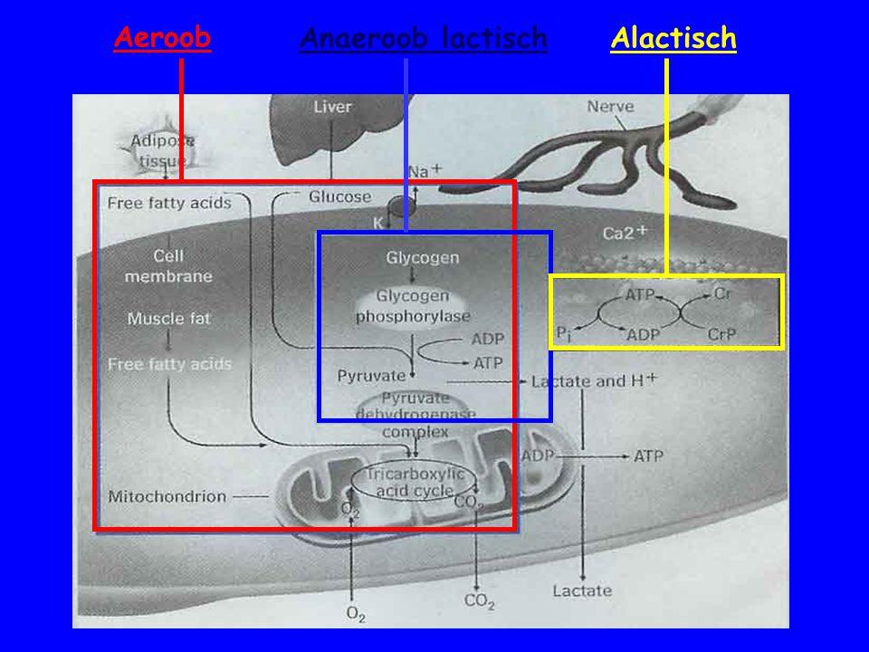Aeroob Anaeroob lactischAlactisch