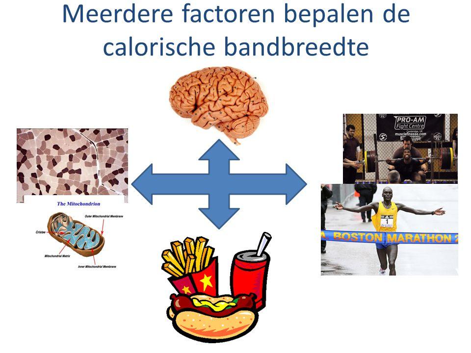 Meerdere factoren bepalen de calorische bandbreedte