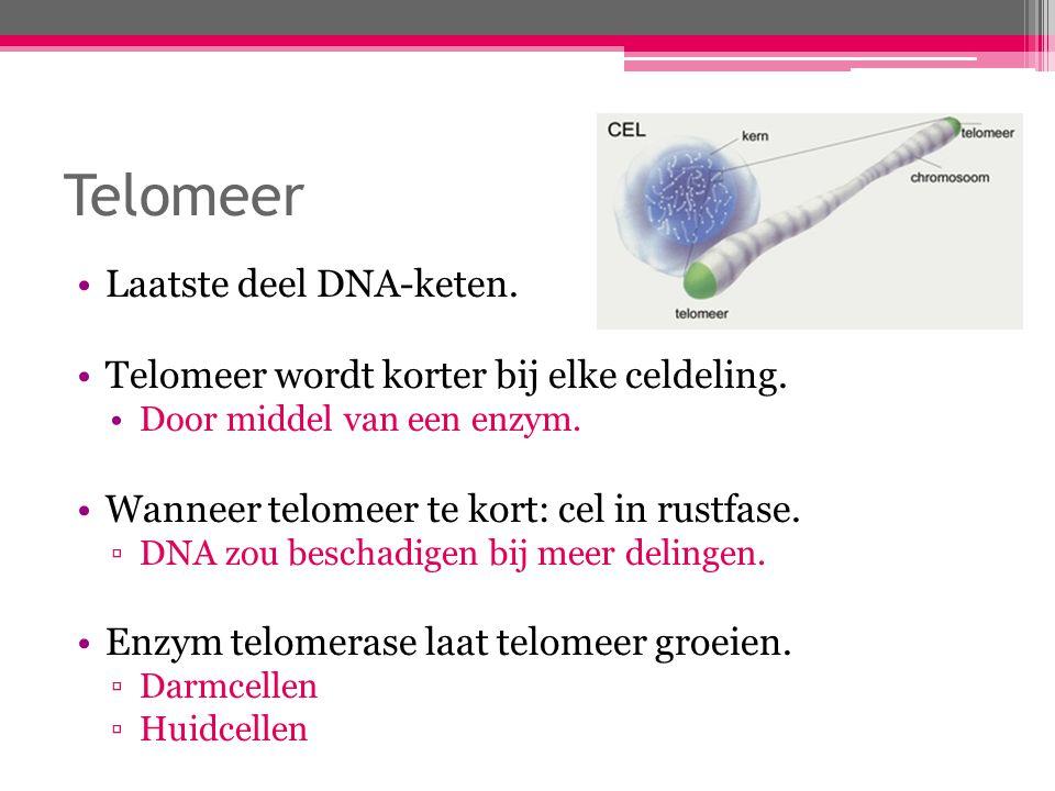 Telomeer Laatste deel DNA-keten. Telomeer wordt korter bij elke celdeling. Door middel van een enzym. Wanneer telomeer te kort: cel in rustfase. ▫DNA