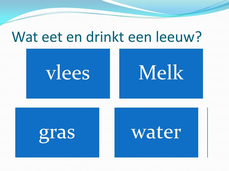 Wat eet en drinkt een leeuw? vleesMelk gras water