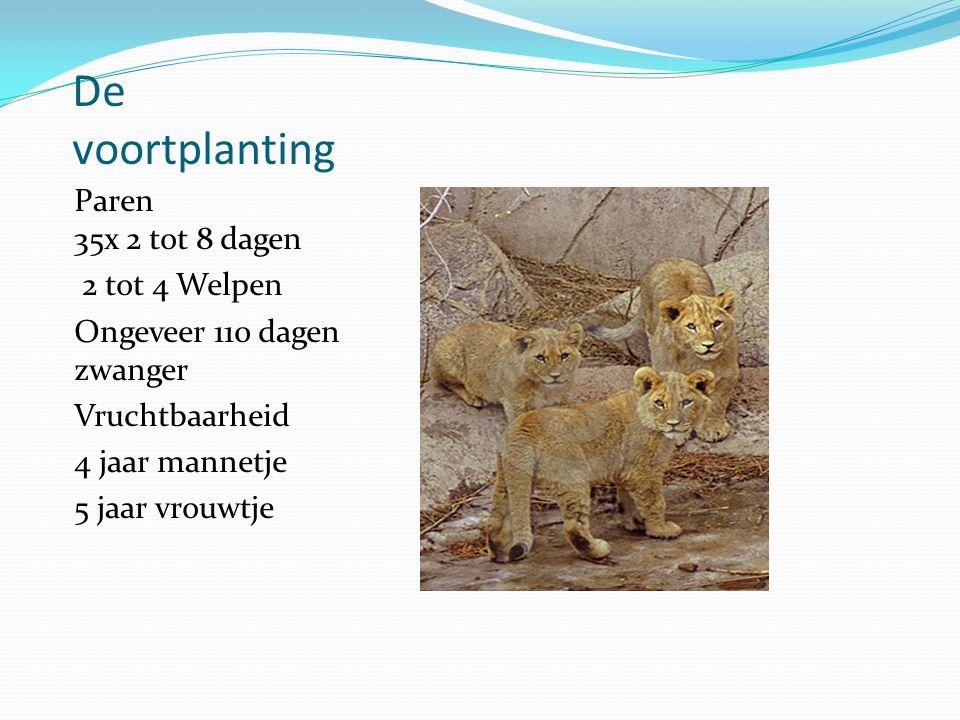De voortplanting Paren 35x 2 tot 8 dagen 2 tot 4 Welpen Ongeveer 110 dagen zwanger Vruchtbaarheid 4 jaar mannetje 5 jaar vrouwtje