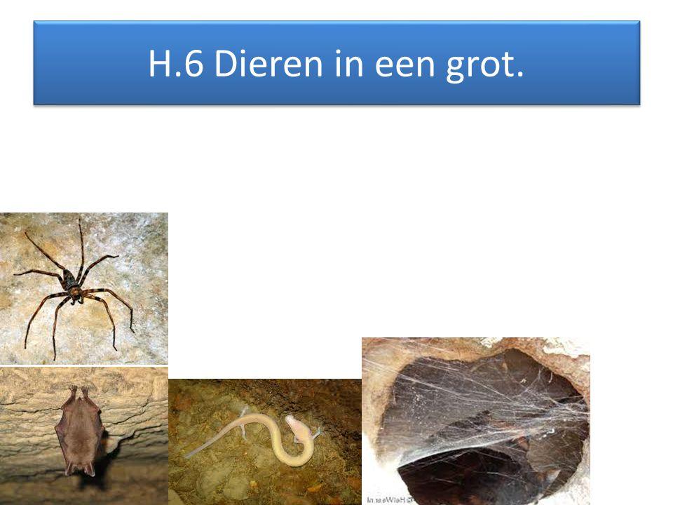 H.5 Edel metaal uit een grot.