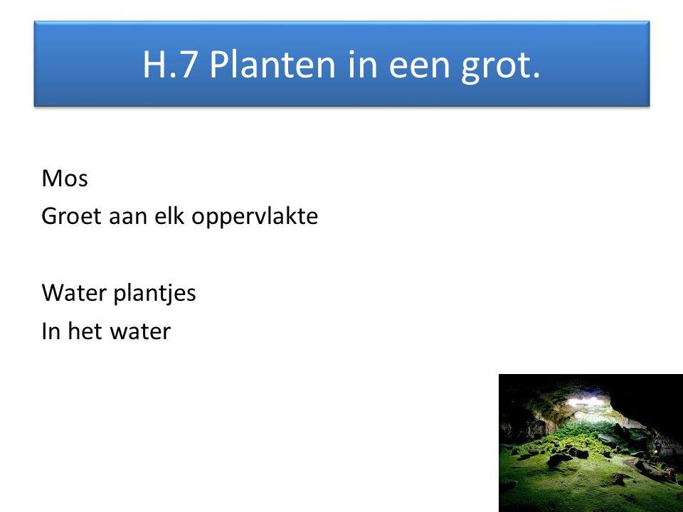 H.7 Planten in een grot. Mos Groet aan elk oppervlakte Water plantjes In het water