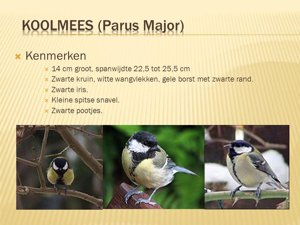  Kenmerken  14 cm groot, spanwijdte 22,5 tot 25,5 cm  Zwarte kruin, witte wangvlekken, gele borst met zwarte rand.  Zwarte iris.  Kleine spitse s