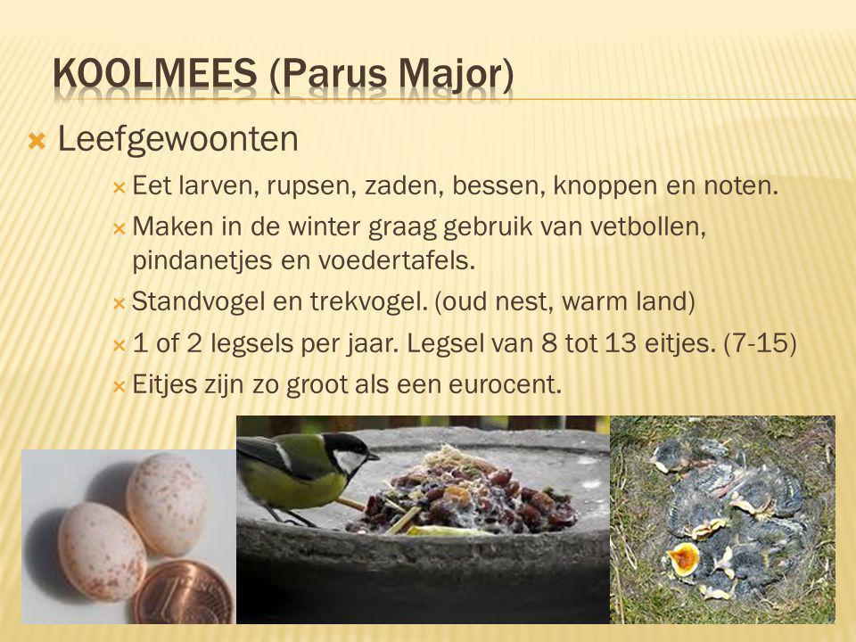  Leefomgeving & Verspreiding  Bosrijke gebieden, groene tuinen.
