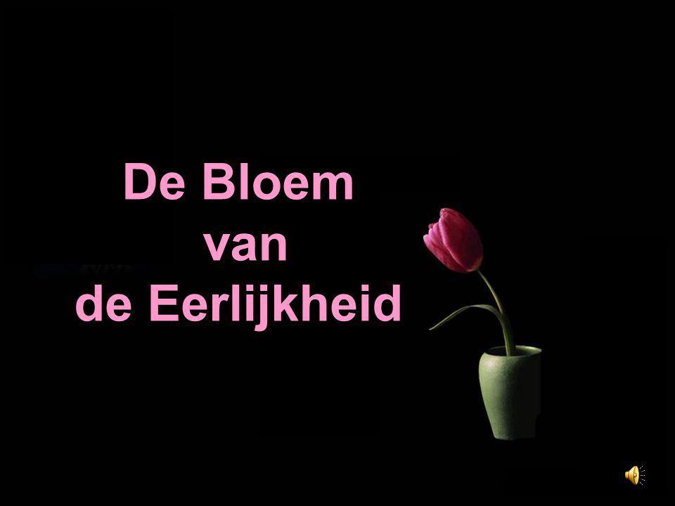 De eerlijkheid is als een bloem geweven met draden van licht, die de beoefenaar verlicht en dat ook uitstraalt naar anderen.