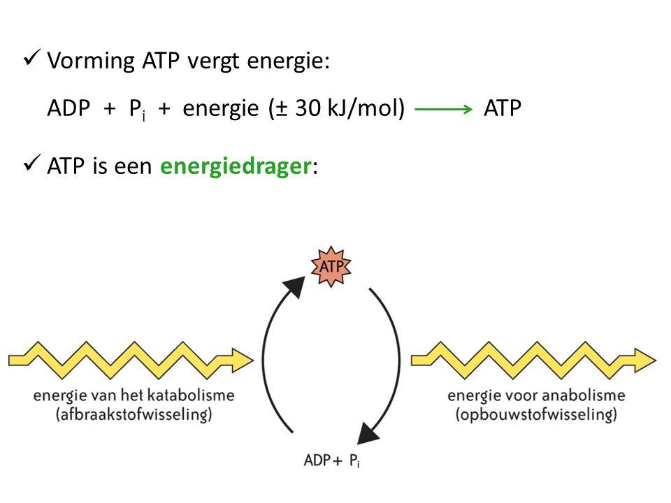 Vorming ATP vergt energie: ADP + P i + energie (± 30 kJ/mol) ATP ATP is een energiedrager: