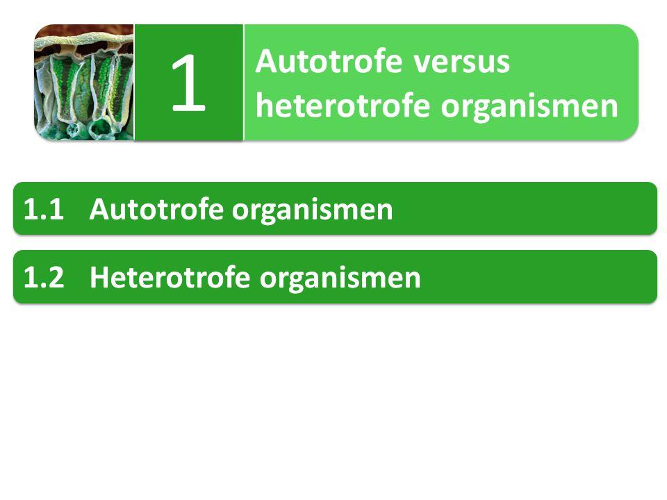 Chemosynthese 8 8 Sommige bacteriën (chemo-autotrofen) bouwen C-verbindingen op met behulp van chemische energie afkomstig van de oxidatie van anorganische stoffen zoals: NH 4 + (ammoniumionen) NO 2 - (nitrietionen) CH 4 (methaan) H 2 S (waterstofsulfide) H 2 (waterstofgas)