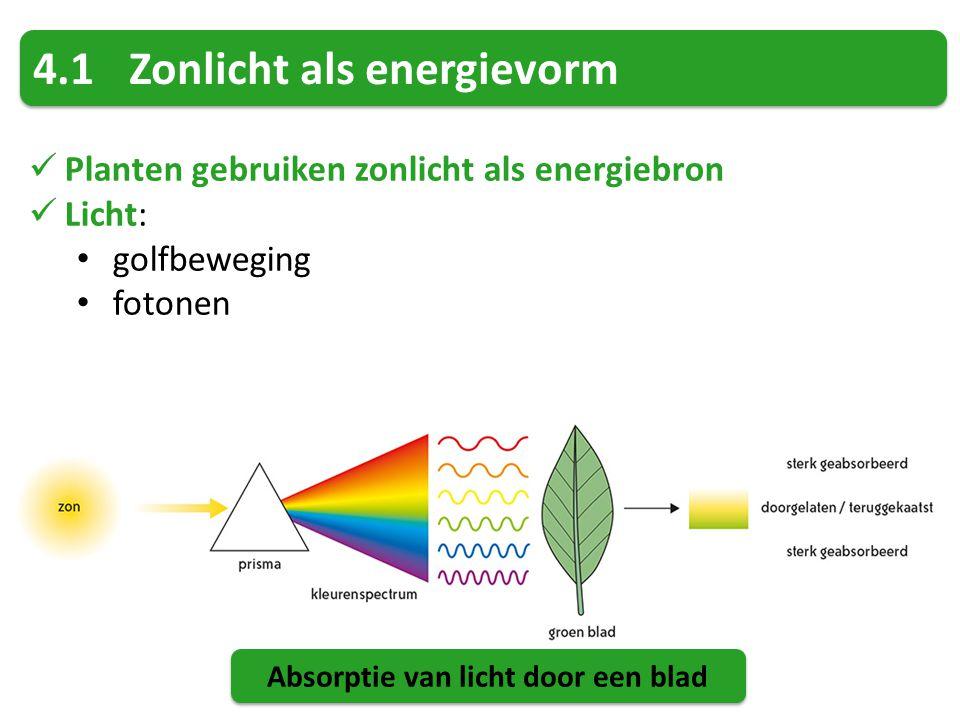 4.1Zonlicht als energievorm Planten gebruiken zonlicht als energiebron Licht: golfbeweging fotonen Absorptie van licht door een blad