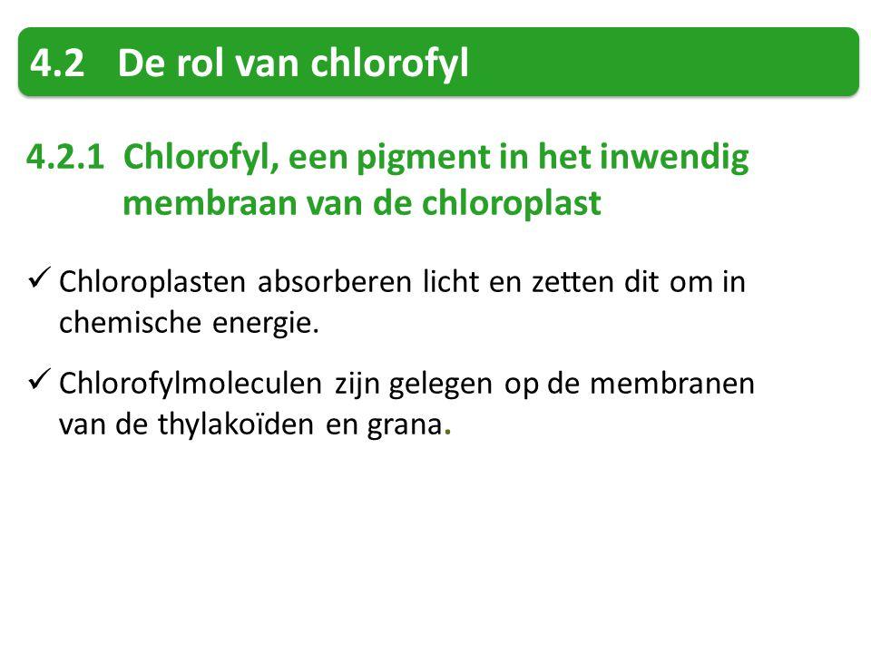 4.2De rol van chlorofyl 4.2.1 Chlorofyl, een pigment in het inwendig membraan van de chloroplast Chloroplasten absorberen licht en zetten dit om in chemische energie.