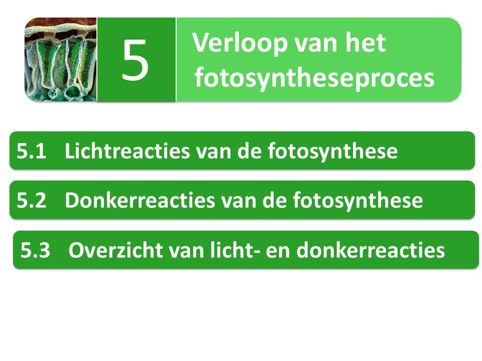 Verloop van het fotosyntheseproces Verloop van het fotosyntheseproces 5 5 5.1Lichtreacties van de fotosynthese 5.2Donkerreacties van de fotosynthese 5.3Overzicht van licht- en donkerreacties