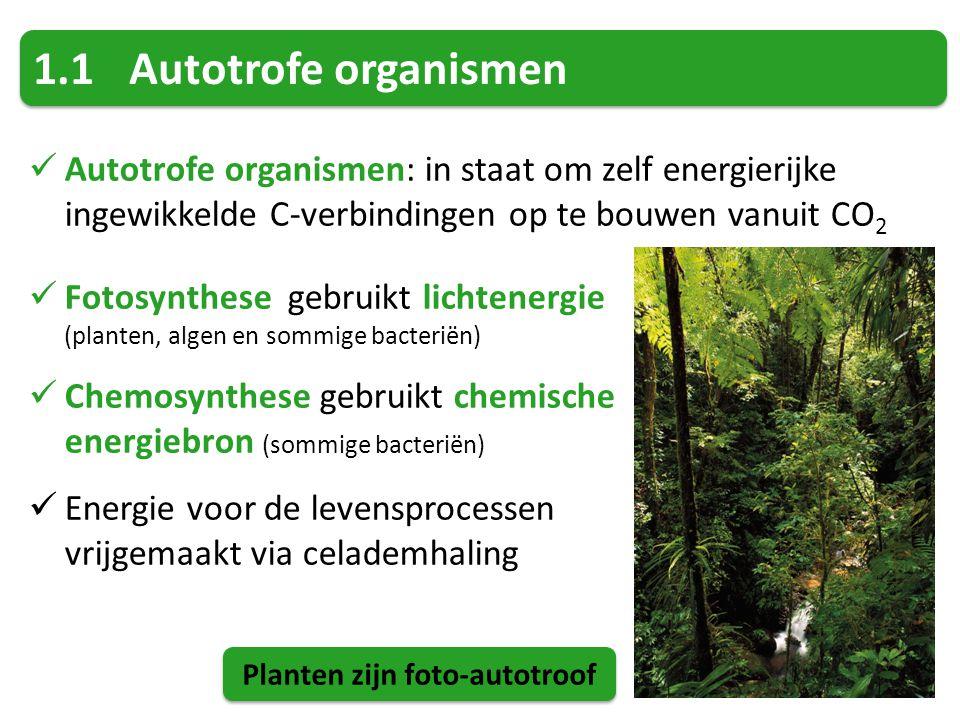 1.1Autotrofe organismen Autotrofe organismen: in staat om zelf energierijke ingewikkelde C-verbindingen op te bouwen vanuit CO 2 Fotosynthese gebruikt lichtenergie (planten, algen en sommige bacteriën) Chemosynthese gebruikt chemische energiebron (sommige bacteriën) Energie voor de levensprocessen vrijgemaakt via celademhaling Planten zijn foto-autotroof