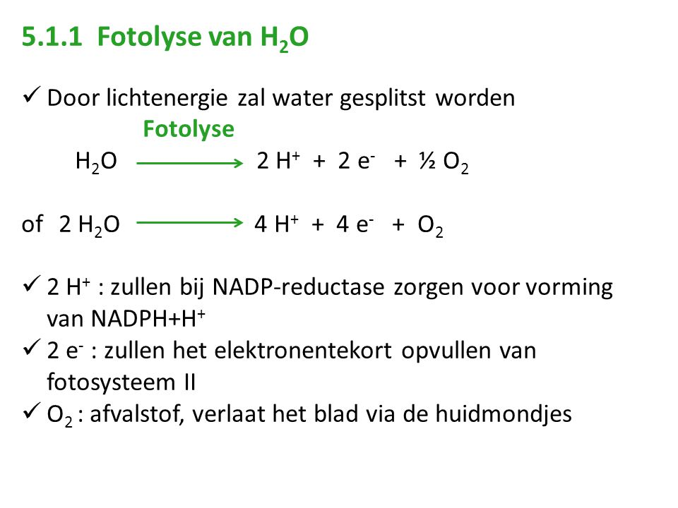5.1.1 Fotolyse van H 2 O Door lichtenergie zal water gesplitst worden Fotolyse H 2 O 2 H + + 2 e - + ½ O 2 of 2 H 2 O 4 H + + 4 e - + O 2 2 H + : zullen bij NADP-reductase zorgen voor vorming van NADPH+H + 2 e - : zullen het elektronentekort opvullen van fotosysteem II O 2 : afvalstof, verlaat het blad via de huidmondjes
