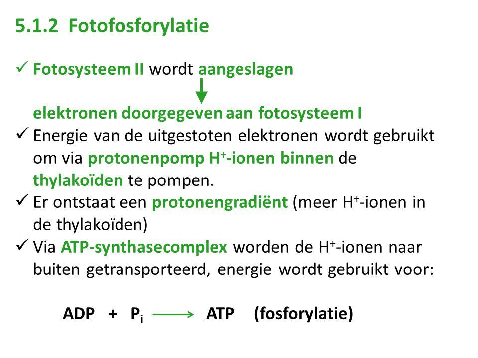 5.1.2 Fotofosforylatie Fotosysteem II wordt aangeslagen elektronen doorgegeven aan fotosysteem I Energie van de uitgestoten elektronen wordt gebruikt om via protonenpomp H + -ionen binnen de thylakoïden te pompen.