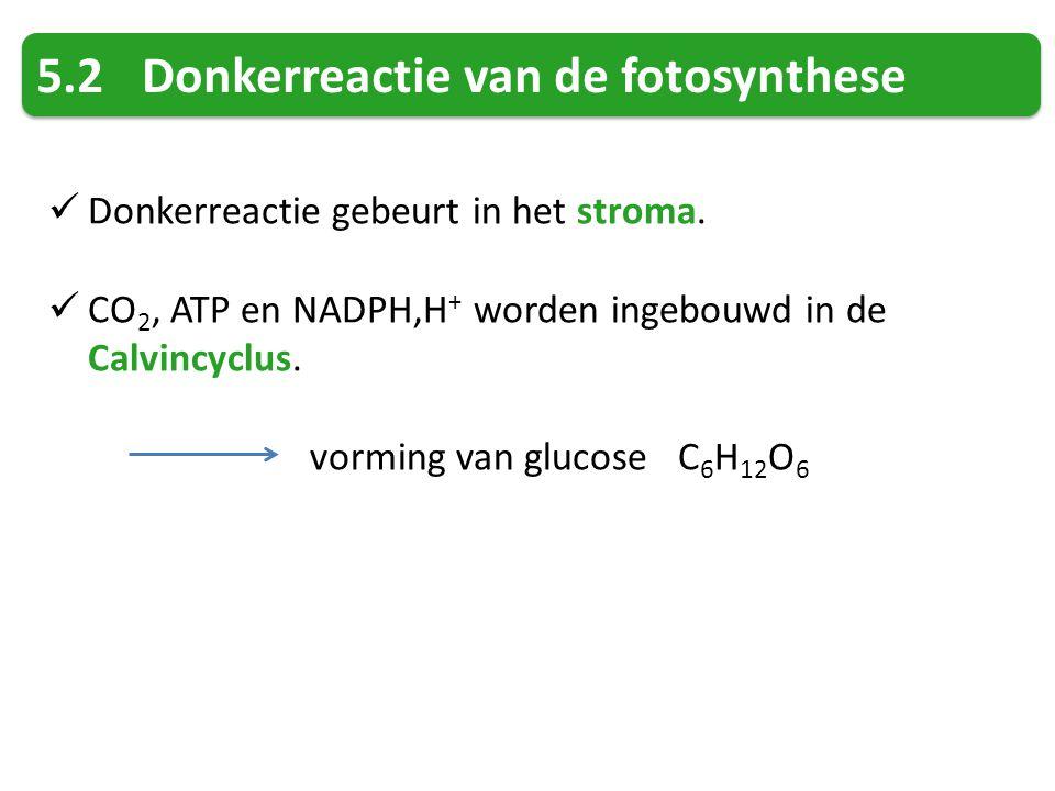 5.2Donkerreactie van de fotosynthese Donkerreactie gebeurt in het stroma.