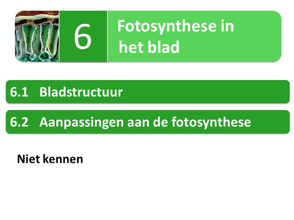 Fotosynthese in het blad Fotosynthese in het blad 6 6 6.1Bladstructuur 6.2Aanpassingen aan de fotosynthese Niet kennen