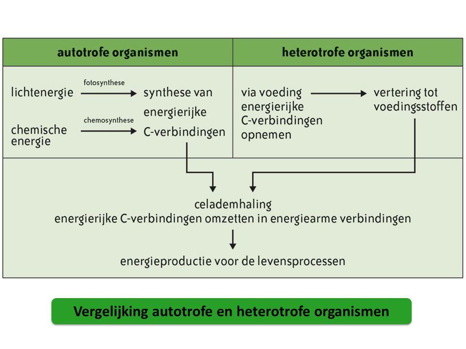 Afwezigheid CO 2 = geen zetmeelvor ming