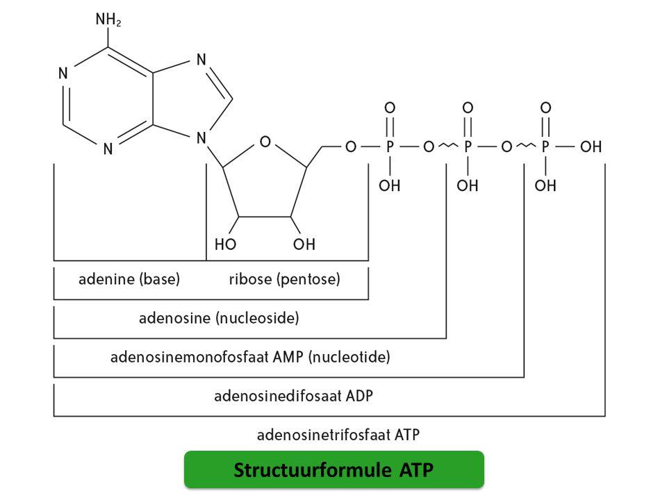 Fotosynthese: energie van zonlicht glucose (zetmeel) aanmaken vanuit CO 2 en H 2 O chlorofyl zet zonne-energie om in chemische energie er wordt O 2 gevormd De globale reactievergelijking van de fotosynthese: 6 CO 2 + 12 H 2 O C 6 H 12 O 6 + 6H 2 O + 6 O 2 Of vereenvoudigd: 6 CO 2 + 6 H 2 O C 6 H 12 O 6 + 6 O 2