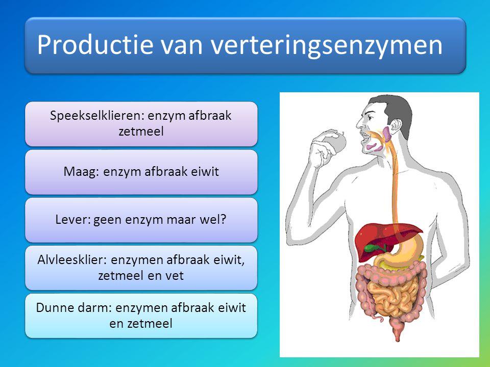 Productie van verteringsenzymen Speekselklieren: enzym afbraak zetmeel Maag: enzym afbraak eiwitLever: geen enzym maar wel? Alvleesklier: enzymen afbr