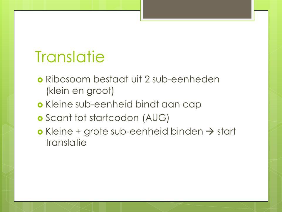 Translatie  Ribosoom bestaat uit 2 sub-eenheden (klein en groot)  Kleine sub-eenheid bindt aan cap  Scant tot startcodon (AUG)  Kleine + grote sub