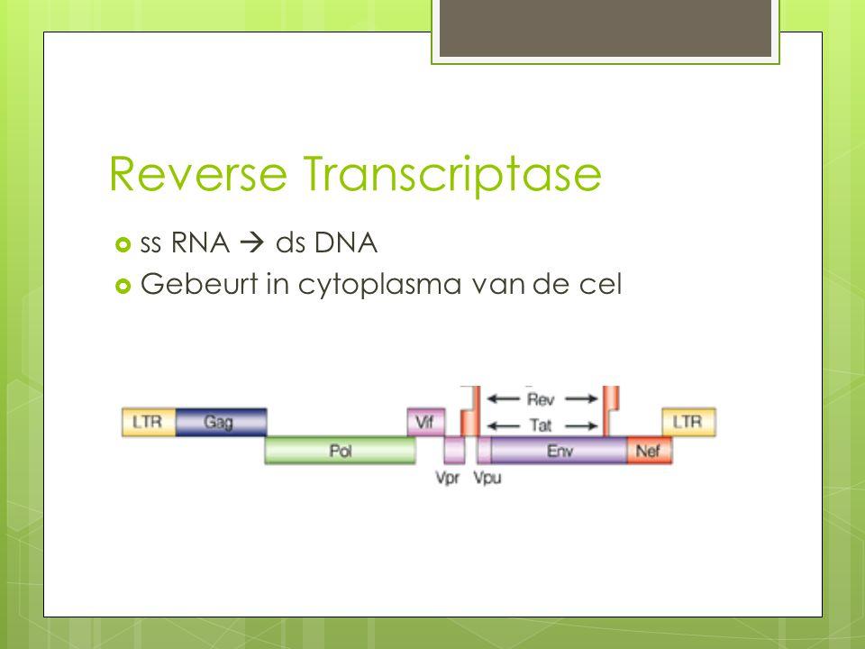 Reverse Transcriptase  ss RNA  ds DNA  Gebeurt in cytoplasma van de cel