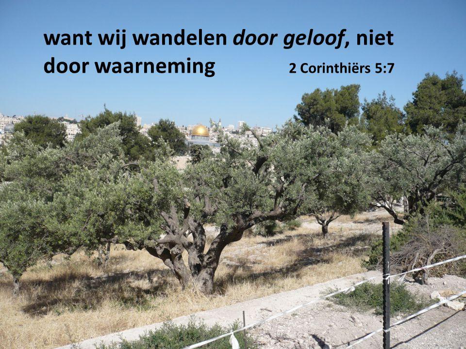 want wij wandelen door geloof, niet door waarneming 2 Corinthiërs 5:7