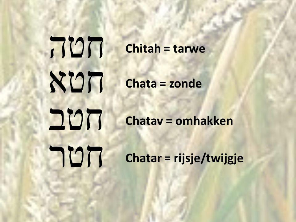 חטה Chitah = tarwe חטא Chata = zonde חטב Chatav = omhakken חטר Chatar = rijsje/twijgje