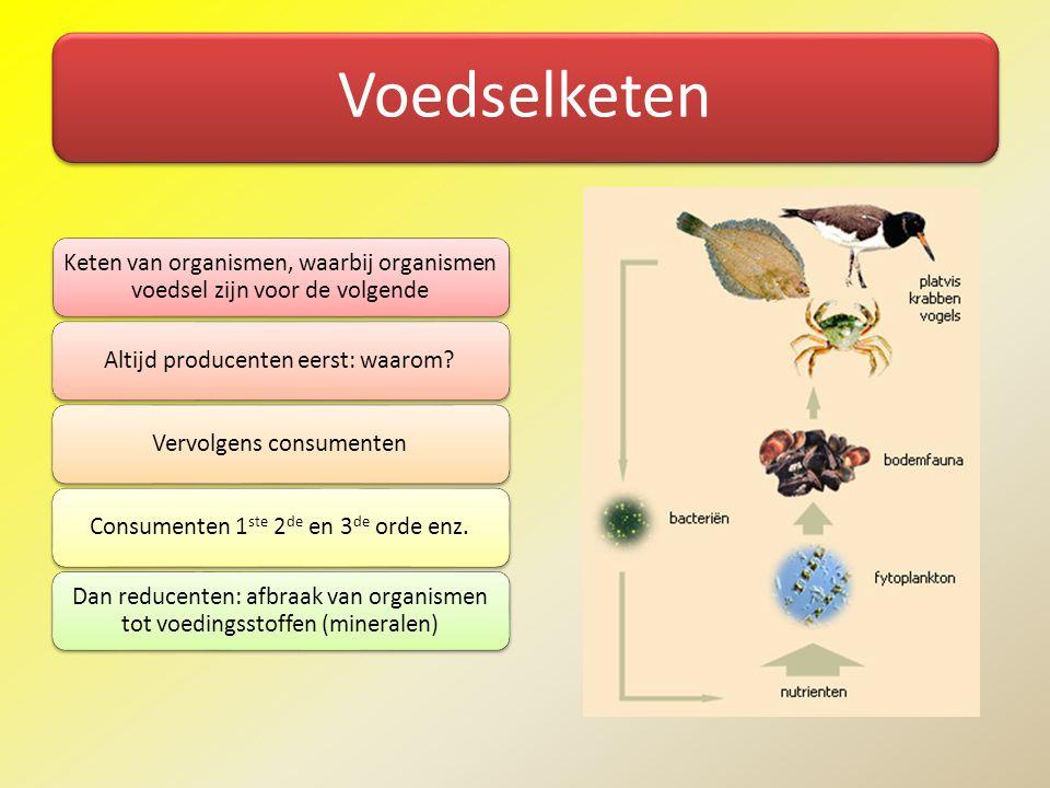 Voedselketen Keten van organismen, waarbij organismen voedsel zijn voor de volgende Altijd producenten eerst: waarom?Vervolgens consumentenConsumenten
