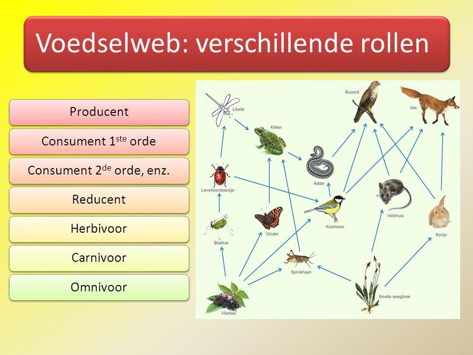 Voedselweb: verschillende rollen ProducentConsument 1 ste ordeConsument 2 de orde, enz.ReducentHerbivoorCarnivoorOmnivoor