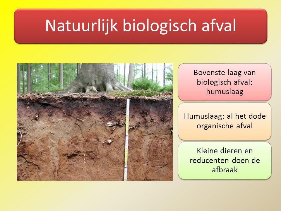 Natuurlijk biologisch afval Bovenste laag van biologisch afval: humuslaag Humuslaag: al het dode organische afval Kleine dieren en reducenten doen de