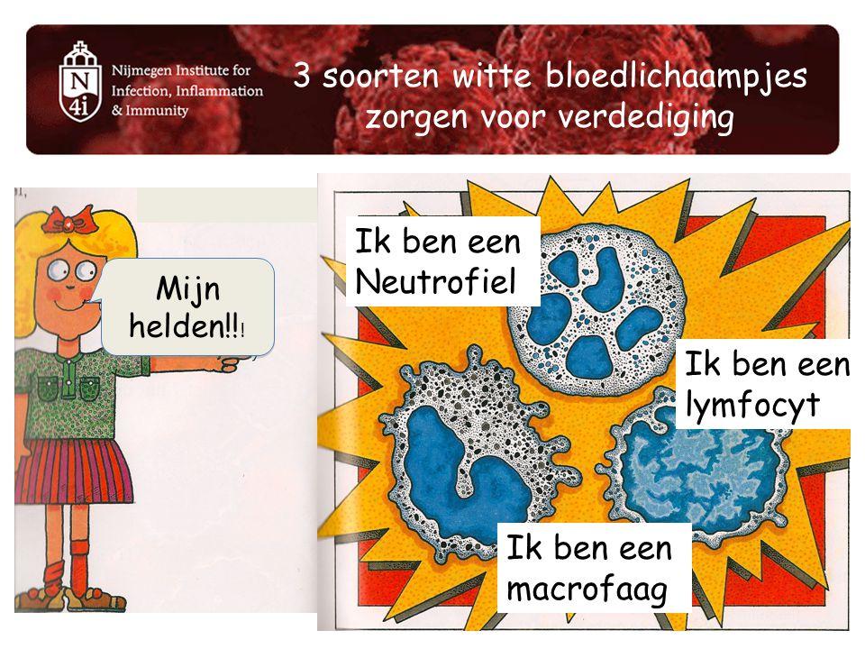 3 soorten witte bloedlichaampjes zorgen voor verdediging Ik ben een Neutrofiel Ik ben een lymfocyt Ik ben een macrofaag Mijn helden!! !