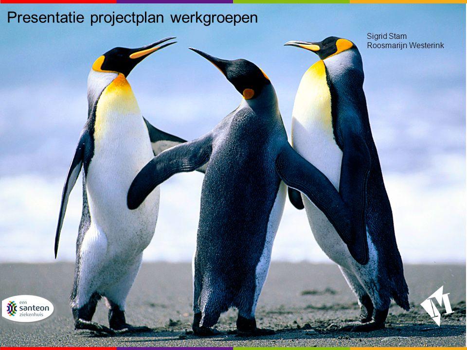 Presentatie projectplan werkgroepen Sigrid Stam Roosmarijn Westerink