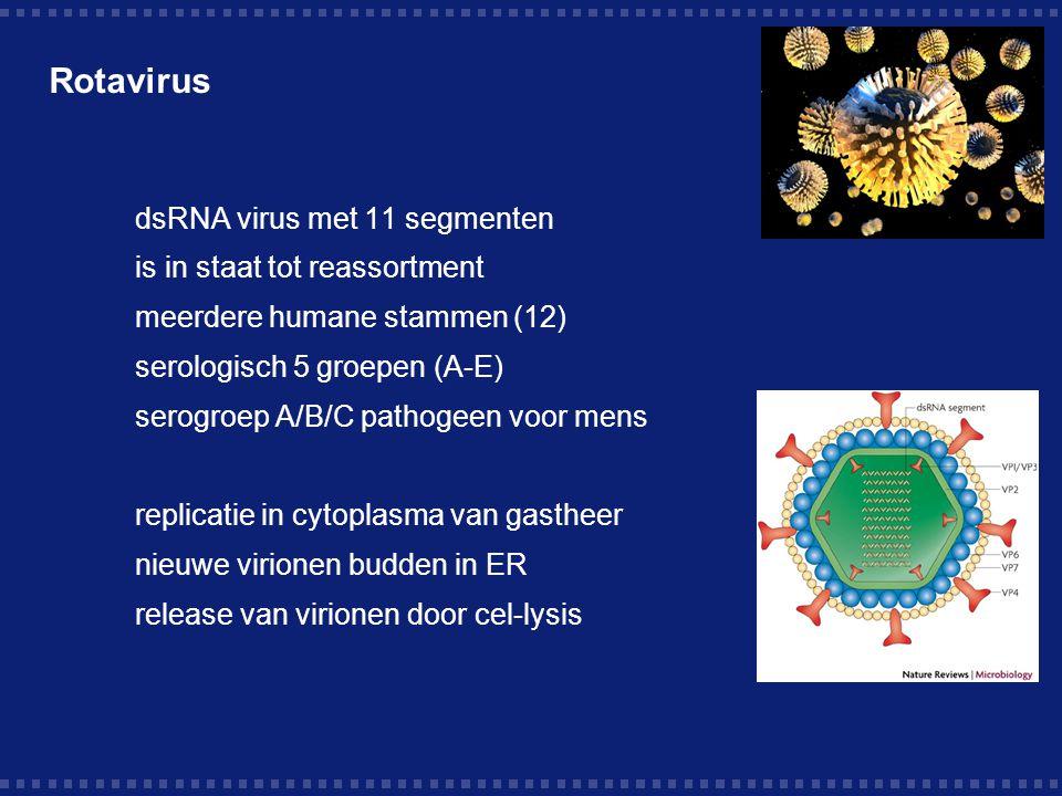 Rotavirus dsRNA virus met 11 segmenten is in staat tot reassortment meerdere humane stammen (12) serologisch 5 groepen (A-E) serogroep A/B/C pathogeen voor mens replicatie in cytoplasma van gastheer nieuwe virionen budden in ER release van virionen door cel-lysis