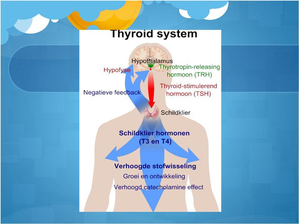 De fysiologie Regulatie metabolisme Evenwicht tussen TSH en T4 middels feedback Alleen TSH prikken is voldoende om nagenoeg alle schildklierfunctiestoornissen uit te sluiten.