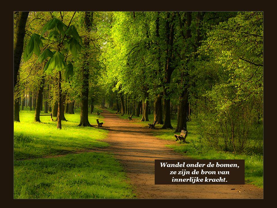 De bestemming van de rit van het leven gaat gepaard met magie.