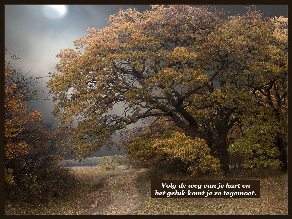 Volg de weg van je hart en het geluk komt je zo tegemoet.