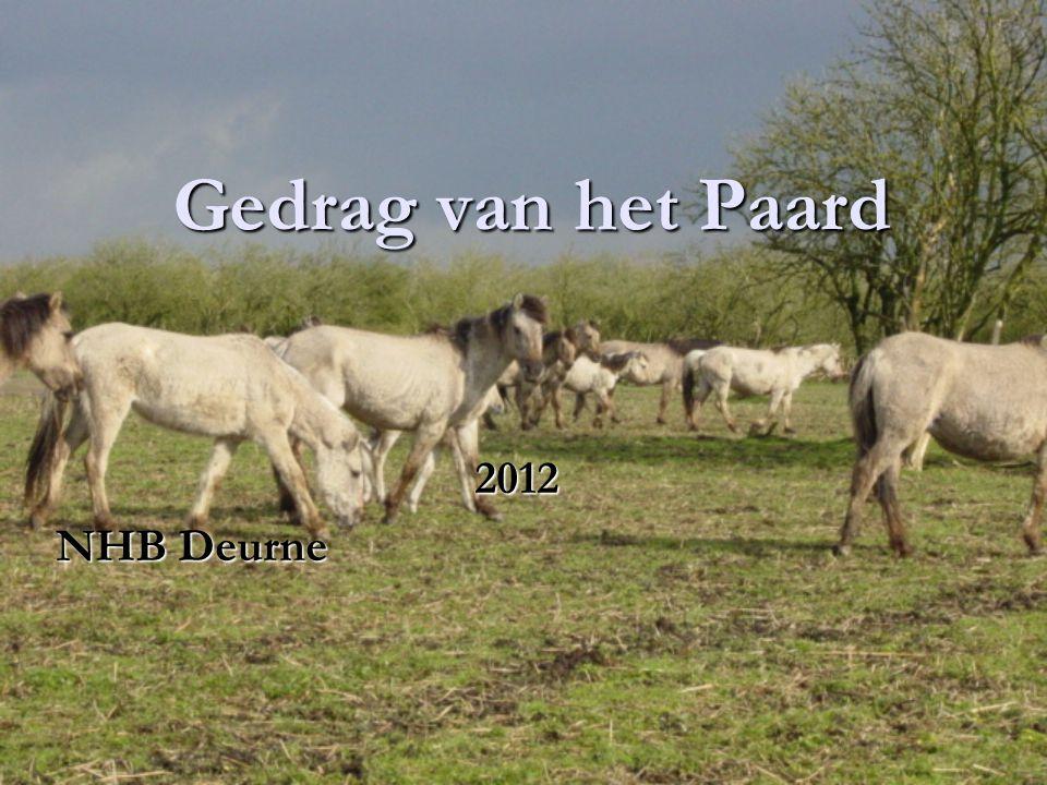 Gedrag van het Paard 2012 NHB Deurne