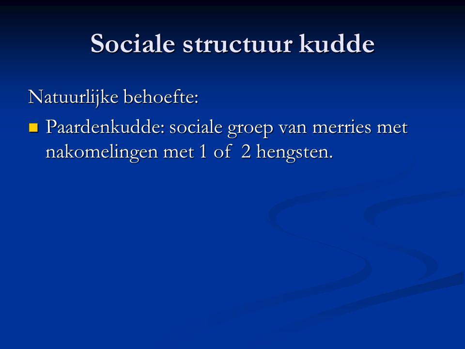 Sociale structuur kudde Natuurlijke behoefte: Paardenkudde: sociale groep van merries met nakomelingen met 1 of 2 hengsten. Paardenkudde: sociale groe
