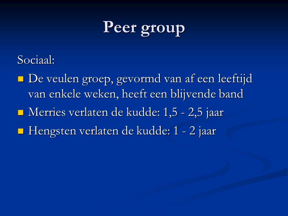 Peer group Sociaal: De veulen groep, gevormd van af een leeftijd van enkele weken, heeft een blijvende band De veulen groep, gevormd van af een leefti
