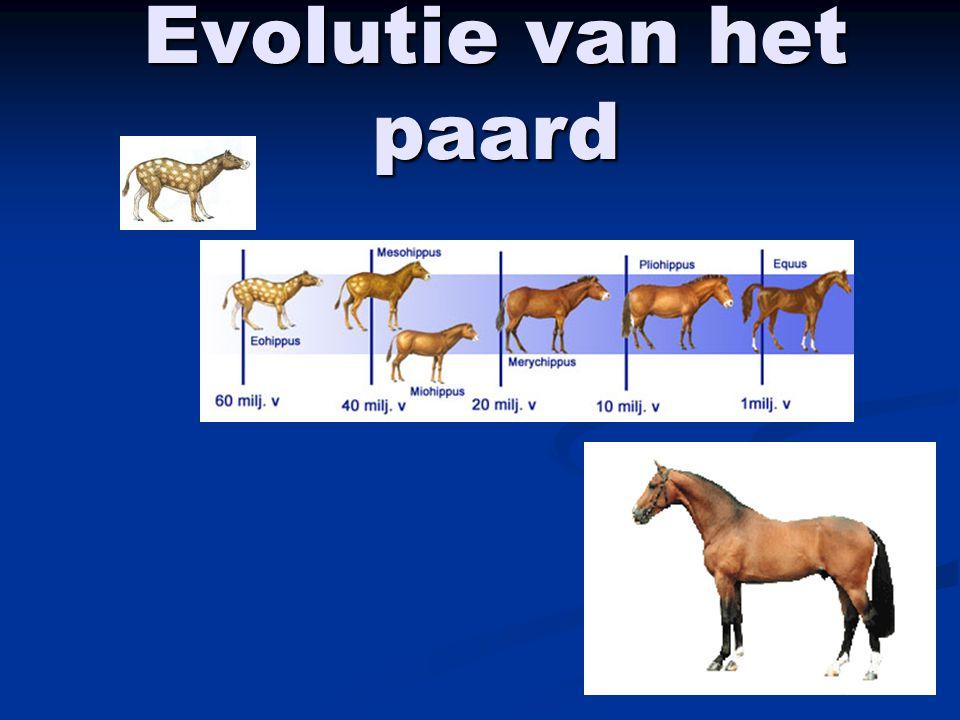 Evolutie van het paard