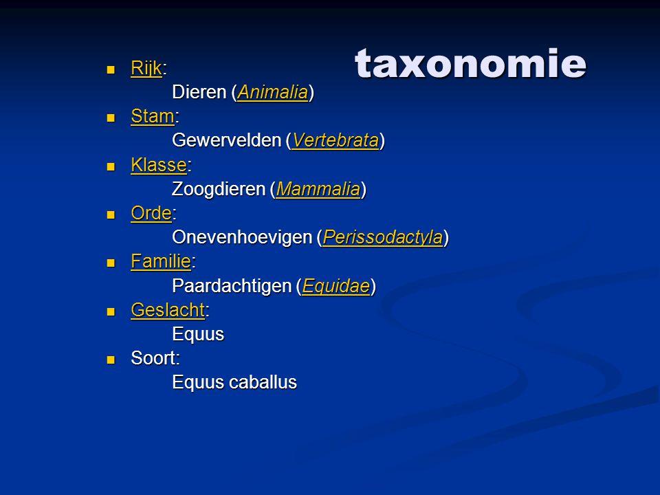 taxonomie Rijk: Rijk: Rijk Dieren (Animalia) Animalia Stam: Stam: Stam Gewervelden (Vertebrata) Vertebrata Klasse: Klasse: Klasse Zoogdieren (Mammalia