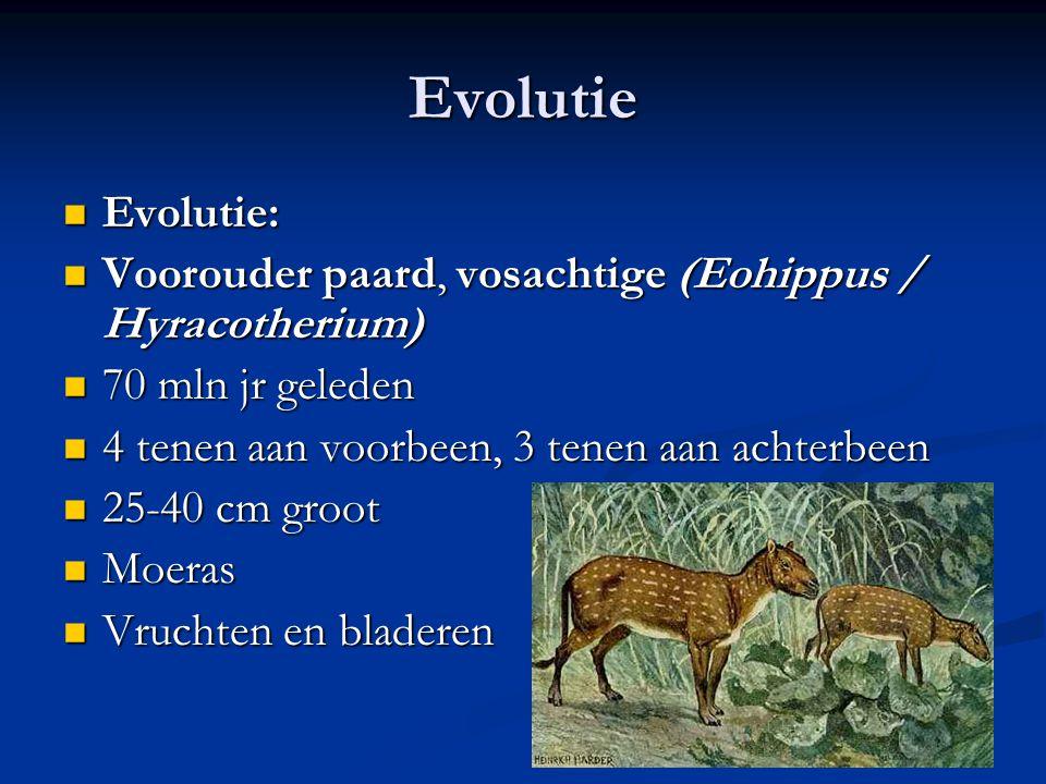 Evolutie Evolutie: Evolutie: Voorouder paard, vosachtige (Eohippus / Hyracotherium) Voorouder paard, vosachtige (Eohippus / Hyracotherium) 70 mln jr g