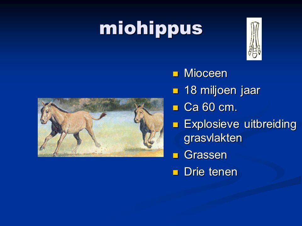 miohippus Mioceen 18 miljoen jaar Ca 60 cm. Explosieve uitbreiding grasvlakten Grassen Drie tenen