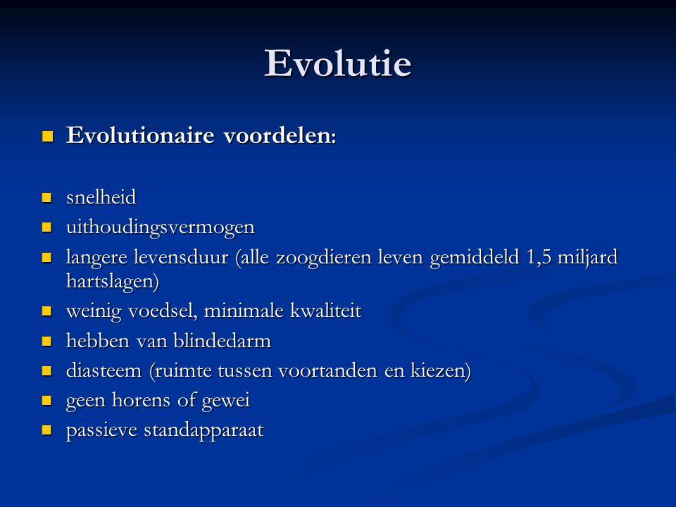 Evolutie Evolutionaire voordelen : Evolutionaire voordelen : snelheid snelheid uithoudingsvermogen uithoudingsvermogen langere levensduur (alle zoogdi
