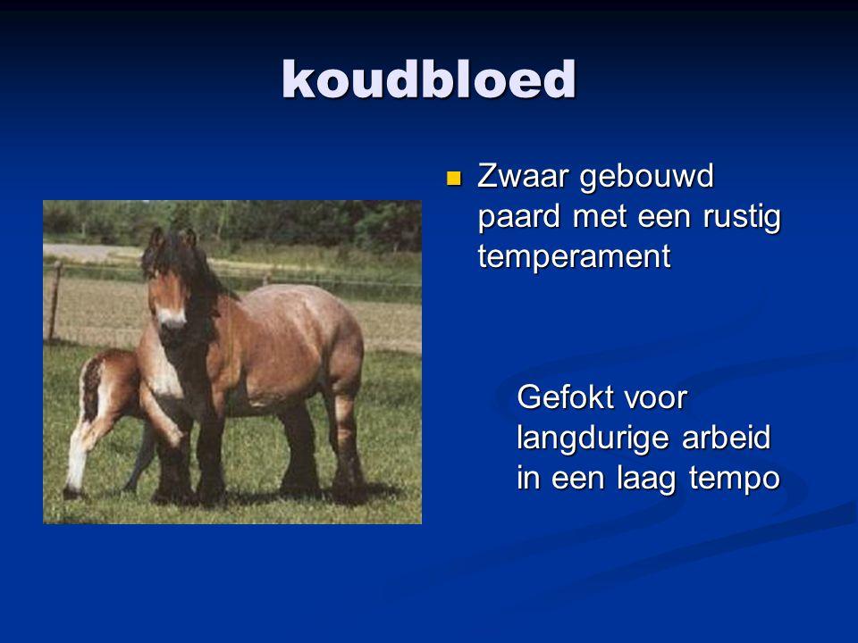 koudbloed Zwaar gebouwd paard met een rustig temperament Gefokt voor langdurige arbeid in een laag tempo