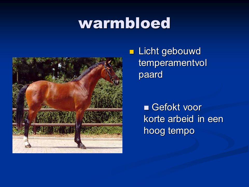 warmbloed Licht gebouwd temperamentvol paard Gefokt voor korte arbeid in een hoog tempo Gefokt voor korte arbeid in een hoog tempo