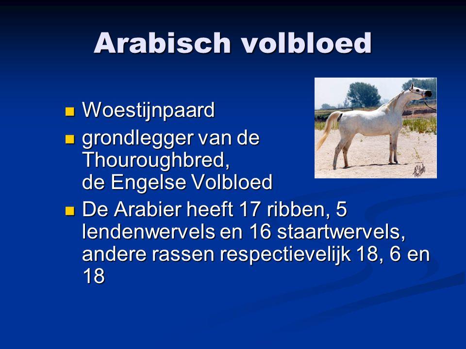 Arabisch volbloed Woestijnpaard Woestijnpaard grondlegger van de Thouroughbred, de Engelse Volbloed grondlegger van de Thouroughbred, de Engelse Volbl