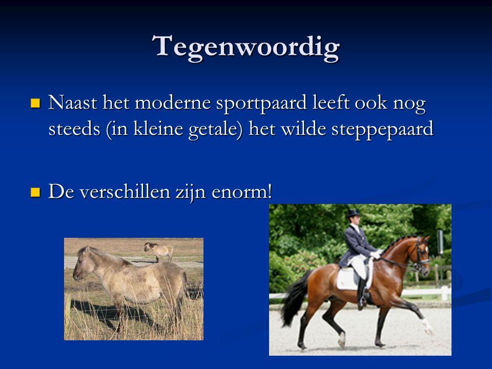 Tegenwoordig Naast het moderne sportpaard leeft ook nog steeds (in kleine getale) het wilde steppepaard Naast het moderne sportpaard leeft ook nog ste